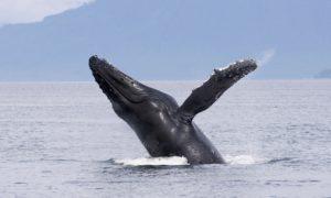 ロサンゼルス 観光 クジラワッチング