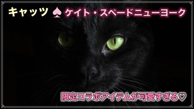 Cats Kate Spade New York キャッツ ケイト・スペードニューヨーク コラボ コレクション アイテム